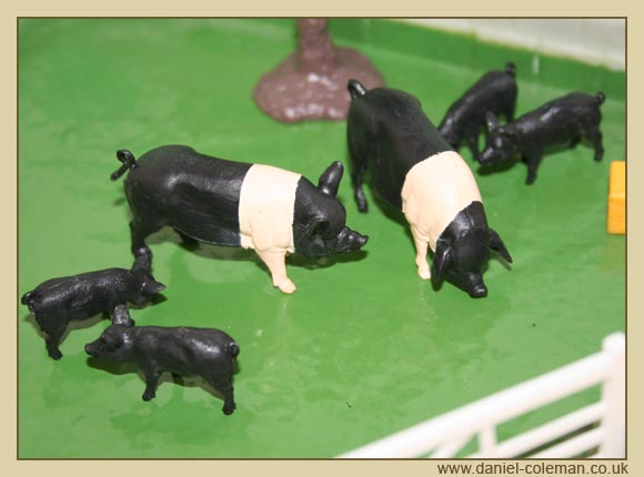 Saddle Back Pigs (Britains)